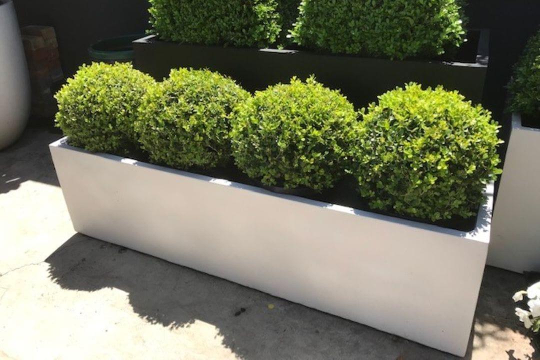 Garden Pots Adelaide