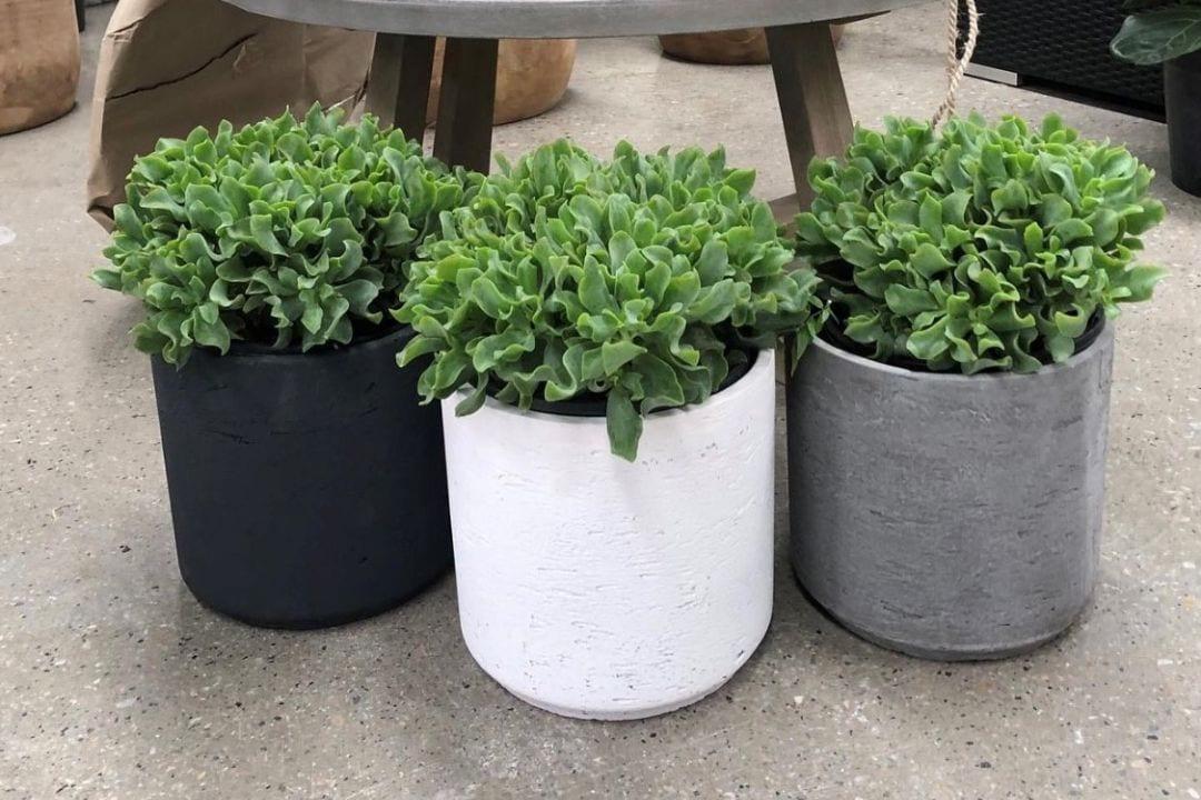 indoor pots adelaide